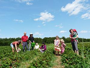 Biolandhof-Grossholz-Erdbeeren-Selbstpfluecker