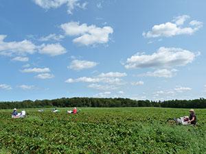 Biolandhof-Grossholz-Erdbeeren-Zwergenwiese
