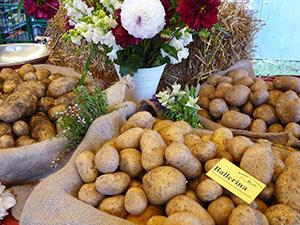 Biolandhof-Grossholz-Freilandkulturen-Kartoffeln