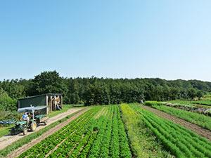 Biolandhof-Grossholz-Freilandkulturen-Kraueter
