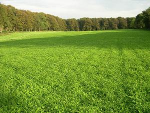 Biolandhof-Grossholz-Fruchtfolge-Kleegras