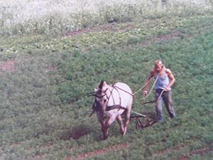 Biolandhof-Grossholz-Pferdearbeit-1987-Gerd-beim-Moehren-hacken