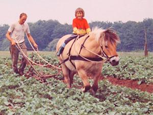 Biolandhof-Grossholz-Pferdearbeit-1994-Kartoffeln-hacken