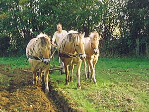 Biolandhof-Grossholz-Pferdearbeit-1996-Fohlen-Ausbildung