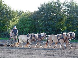 Biolandhof-Grossholz-Pferdearbeit-Dethlef-Nimue