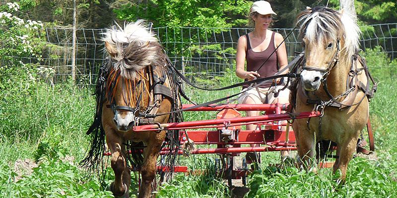 Biolandhof-Grossholz-Pferdearbeit-Titel