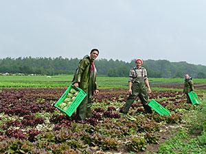Biolandhof-Grossholz-Unsere-Arbeit-Salaternte-Regen
