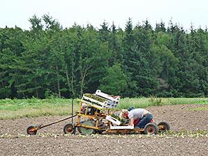 Biolandhof-Grossholz-Unsere-Arbeit-Salatpflanzen
