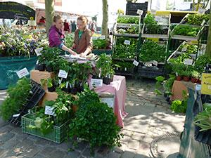 Biolandhof-Grossholz-Vermarktung-Wochenmarkt-Jungpflanzen-Verkauf