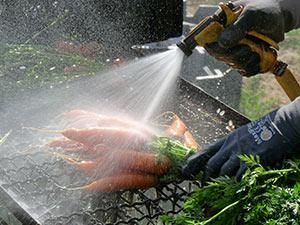 Biolandhof-Grossholz-Bund-Moehren-Waschen