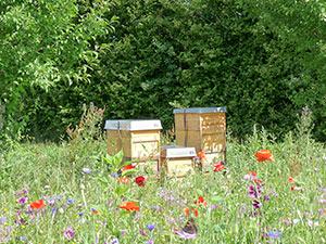 Biolandhof-Grossholz-Impressionen-Bienenstoecke