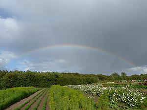 Biolandhof-Grossholz-Impressionen-Regenbogen-Kraeuterfeld