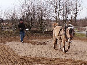 Biolandhof-Grossholz-Pferde-Geraete-Arbeit-Hera-Training
