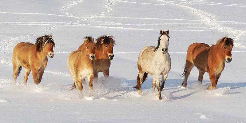 Biolandhof-Grossholz-Pferdearbeit-Ueber-unsere-Pferde-Titel