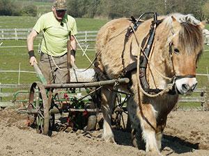 Biolandhof-Grossholz-Pferdearbeit-Ueber-unsere-Pferde-Winni