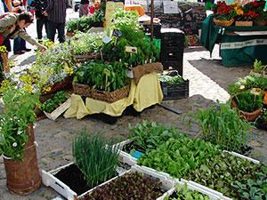 Biolandhof-Grossholz-Vermarktung-Gottorfer-Landmarkt-Jungpflanzen