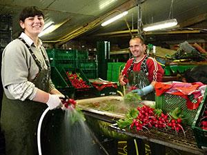 Biolandhof-Grossholz-Vermarktung-Grosshandel-Radieschen-waschen
