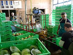 Biolandhof-Grossholz-Vermarktung-Grosshandel-Salatwaschmaschine